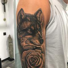 Lobo y rosa
